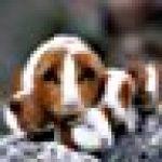 Klarstein Mini Taverna Mini frigo • Glacière électrique design vintage • 4 litres de volume issu de la série Taverna Bella en argent • Secteur ou allume-cigare 12V • Étagère et porte-tablette amovible • Faible poids et poignée • Argent de la marque Klarst image 10 produit
